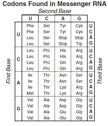 codon table.jpg