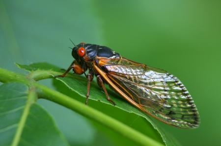 Cicada sitting on a branch