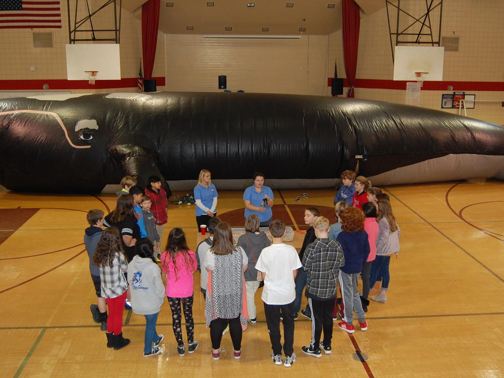 Students learning about modern fisheries with UNCW and their 58 whale!