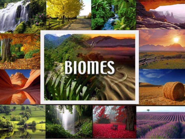 Biome Overview