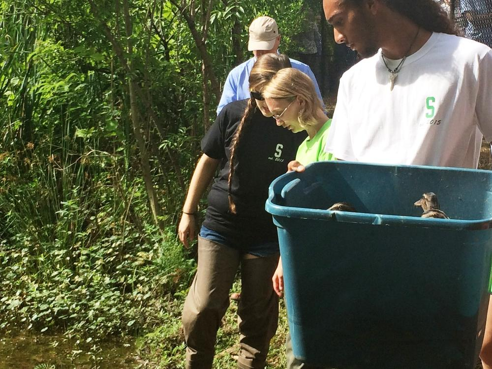 STEM: Environmental Science Class' Duck Pond for Research