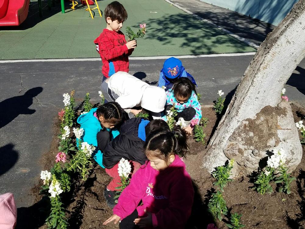 Each child helped to plant a flower!