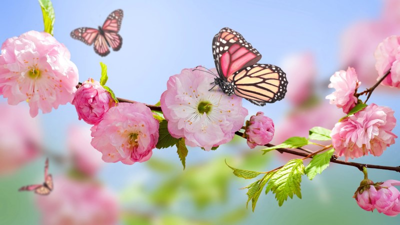 Blossoms with Butterflies