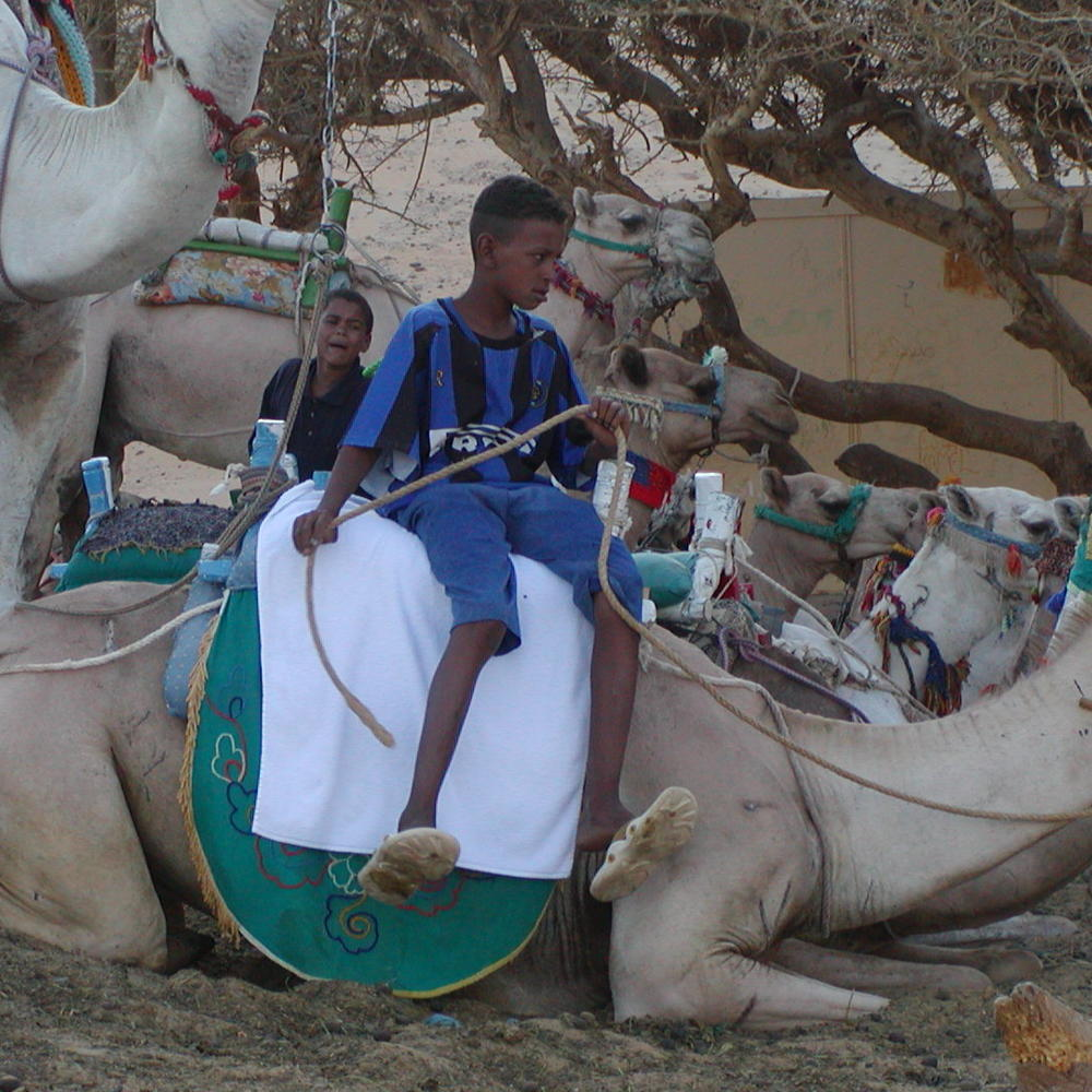Preparing a camel for a ride along the Nile River in Egypt.