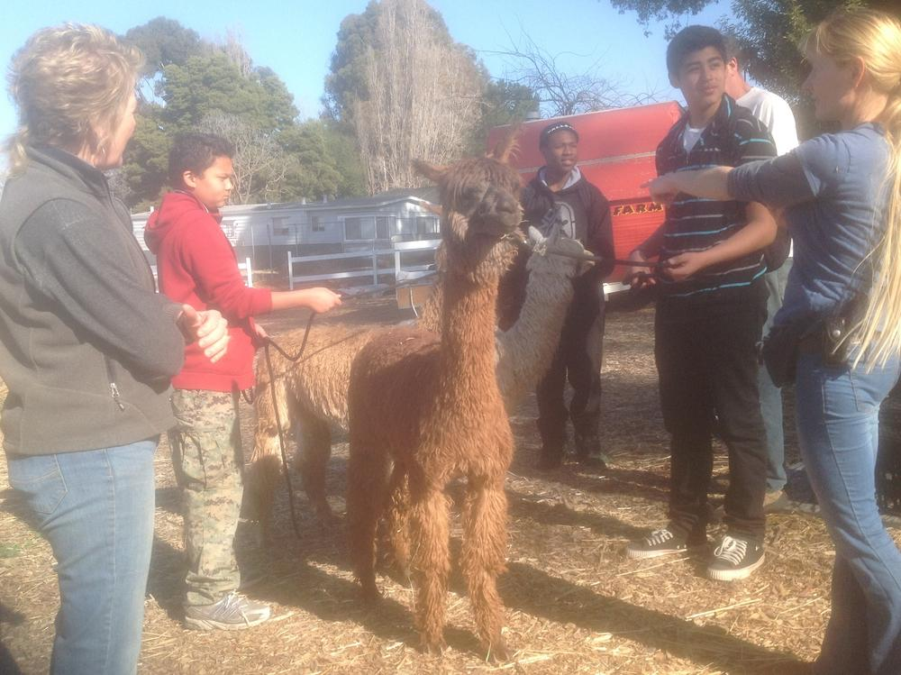 Alpaca arrival day. TY and Jose get a lesson from Farmer Rita.
