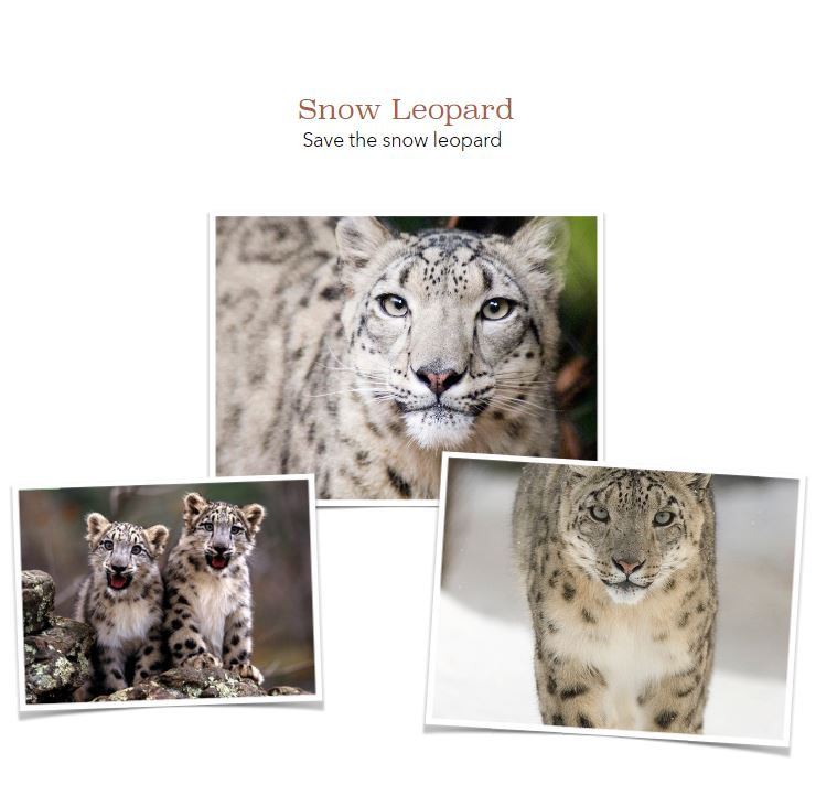 Snow Leopards by Ava.JPG