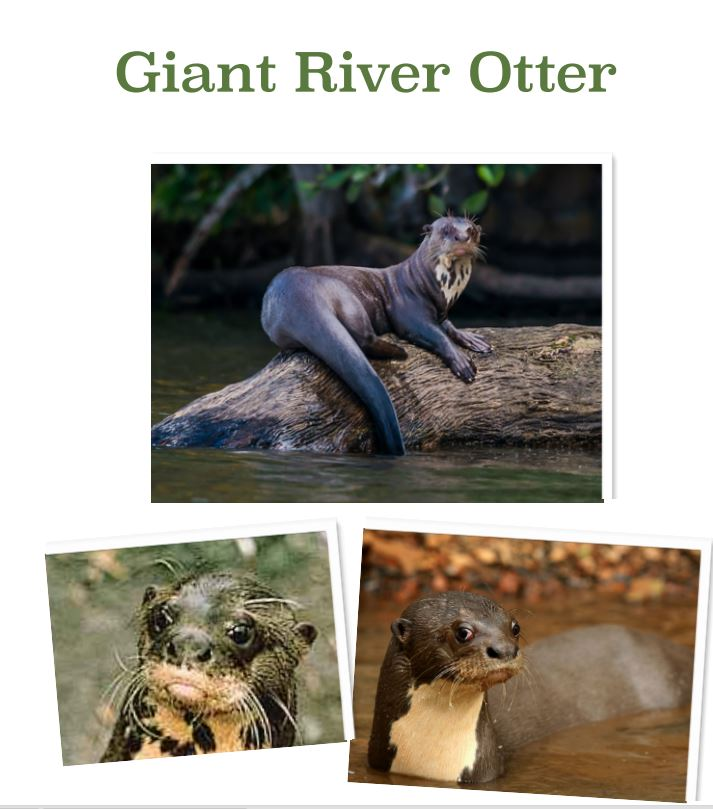 River Otters by Luke.JPG