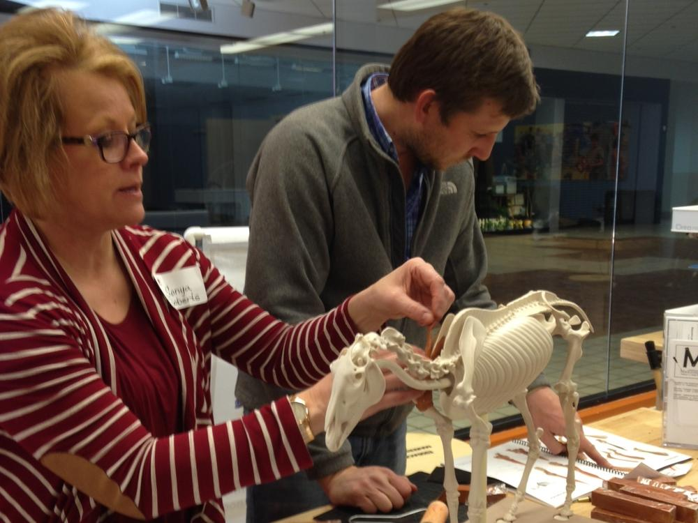 Teachers learn new things before teaching their classes. Mr. Stroman recently  attended an animal anatomy workshop where he worked with animal models much  like the anatomy students work with human models.
