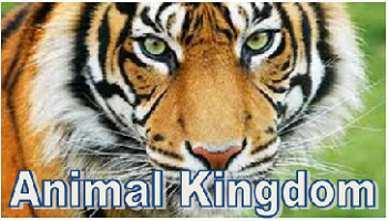 Animal Kingdom encyclopedia