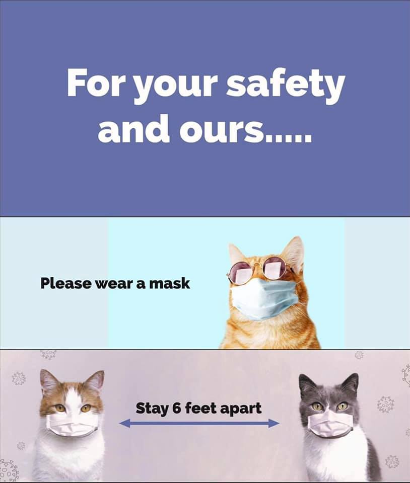 Cat safety tips