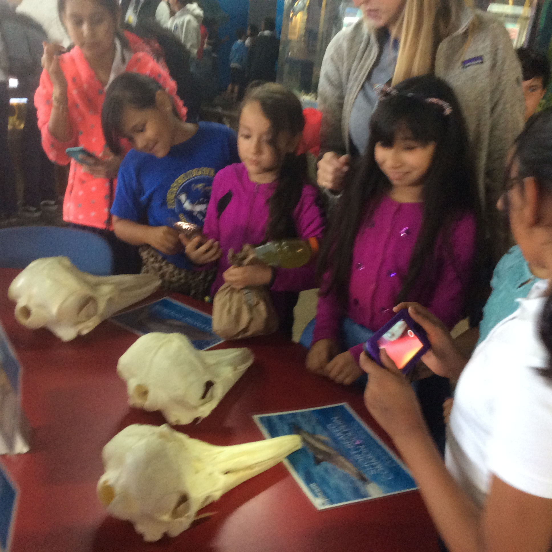 Science field trip to Santa Monica Aquarium