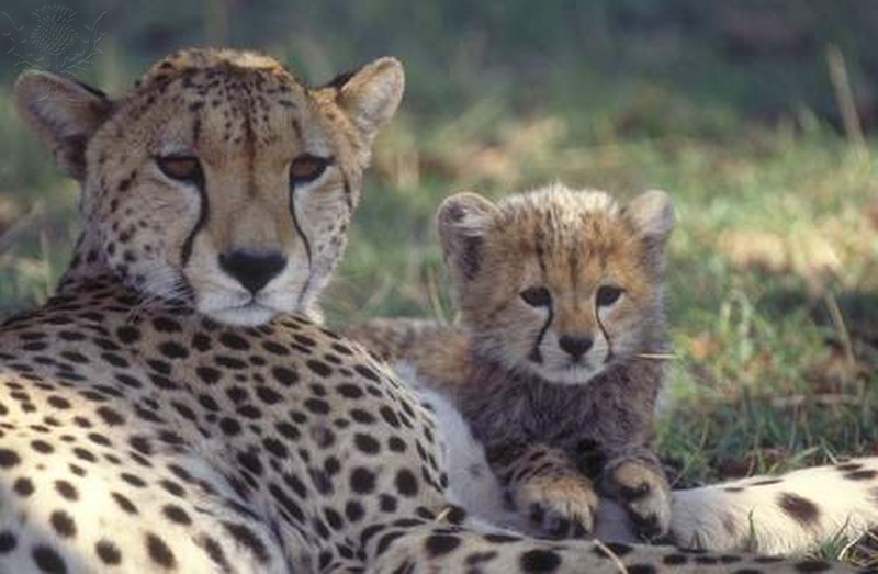 Read to your cheetah cub every day!