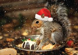 Happy Holidays to Our Animal Friends!
