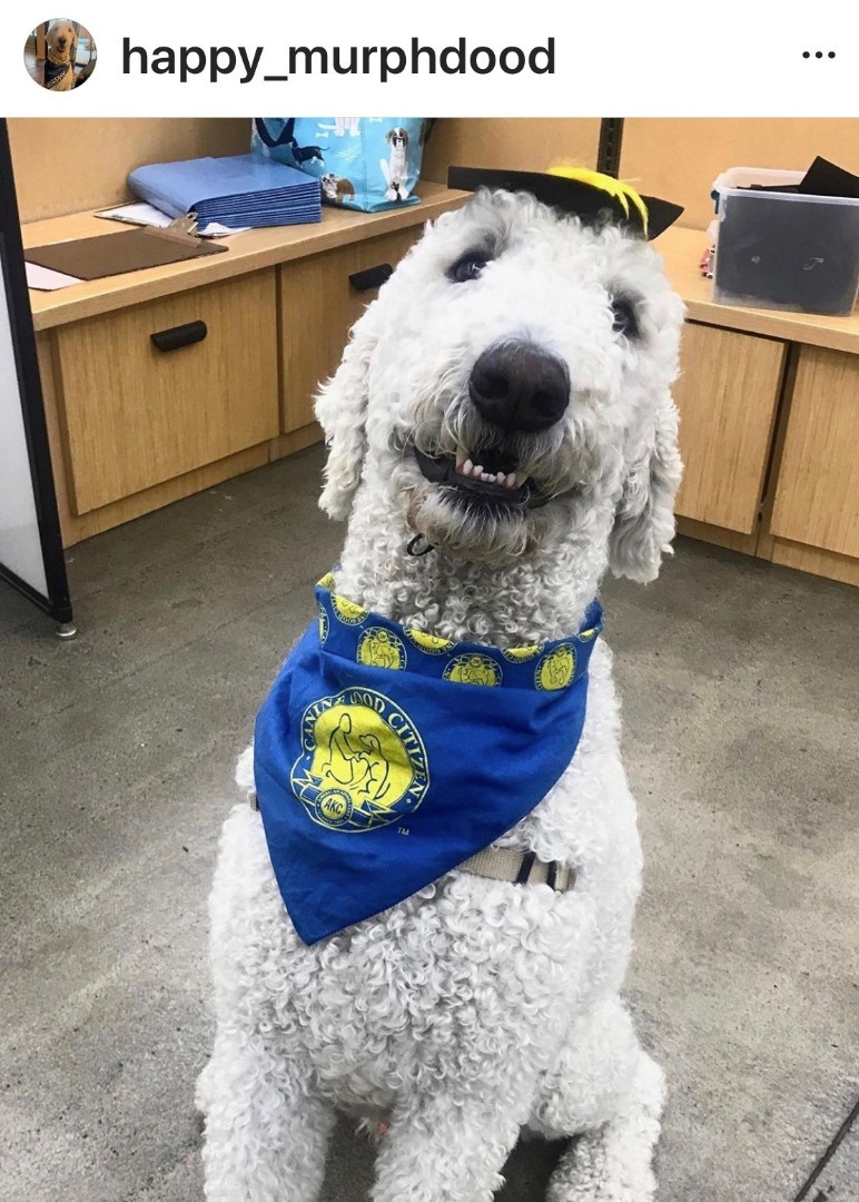 Murphy the Therapy Dog