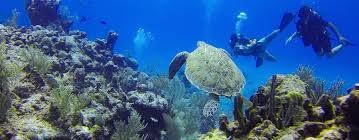 Sea Turtles & Divers