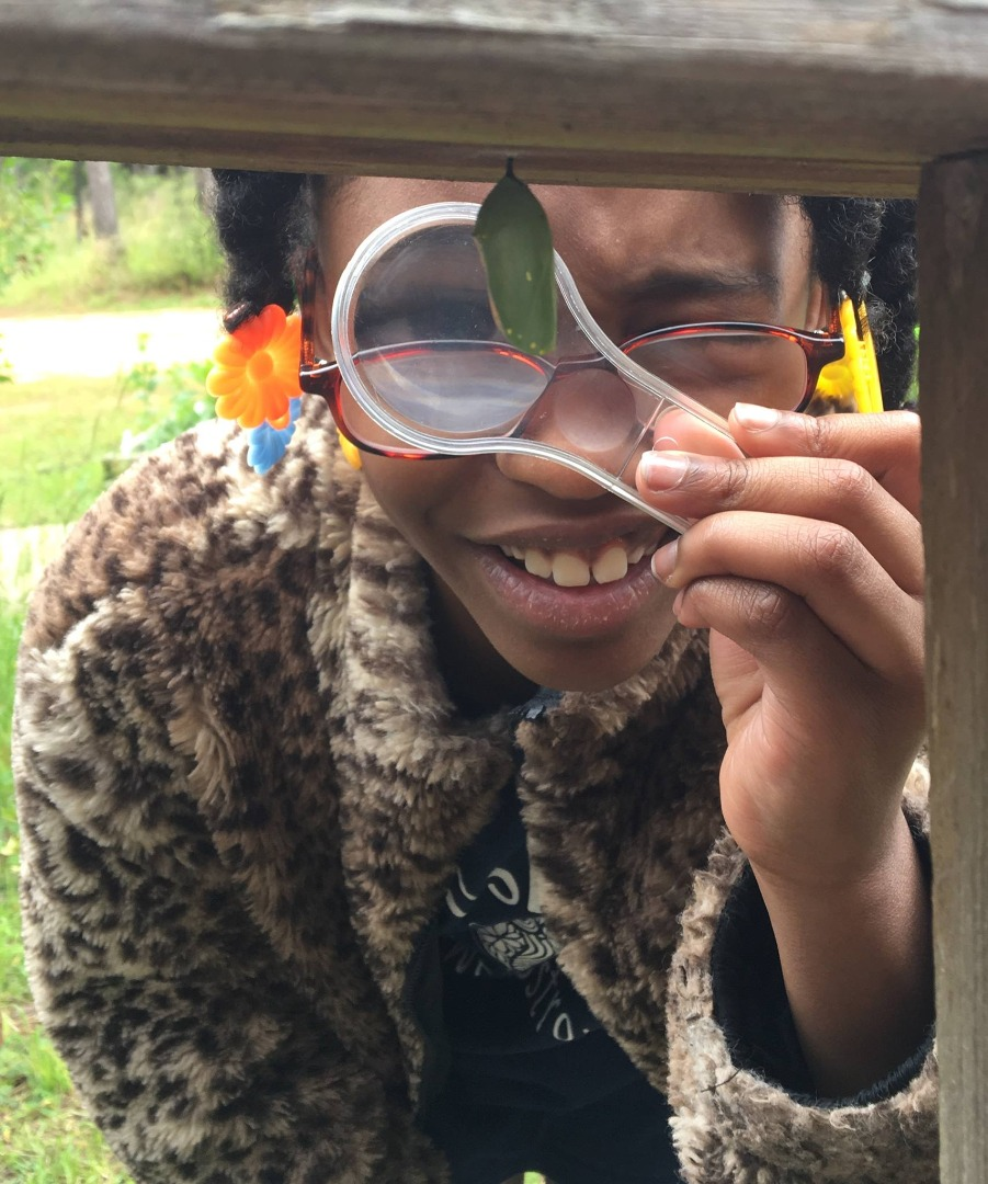Student observing a chrysalis