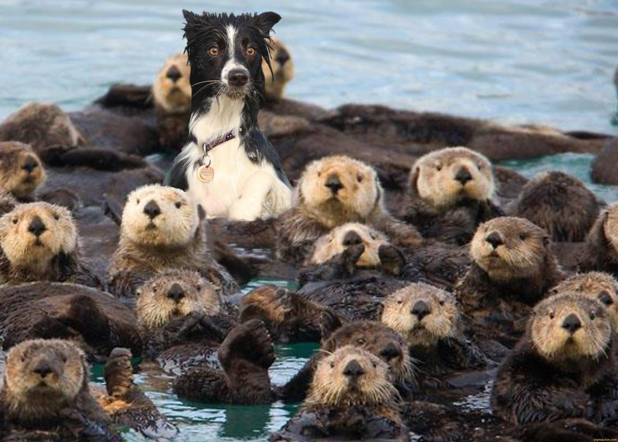 sea-otter-dog.jpg