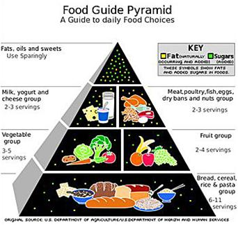 Food-Pyramid_thumb.jpg
