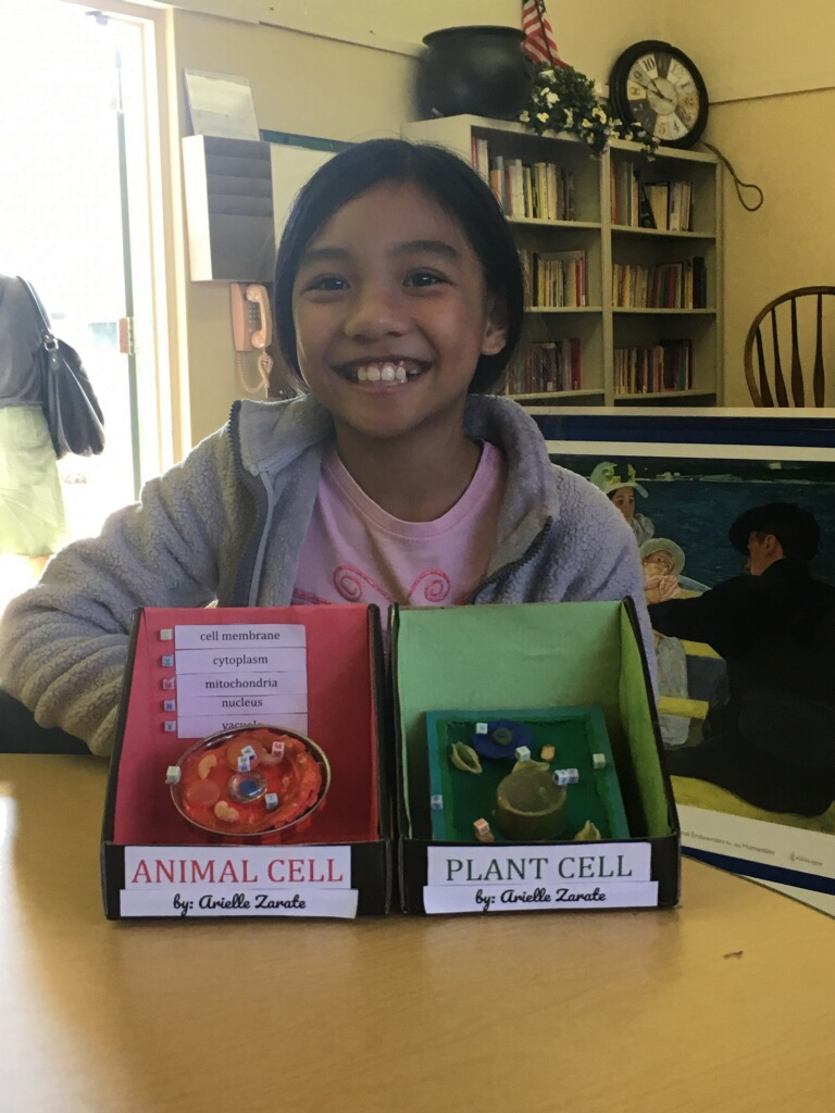 Arielle's Plant & Animal Cell Models