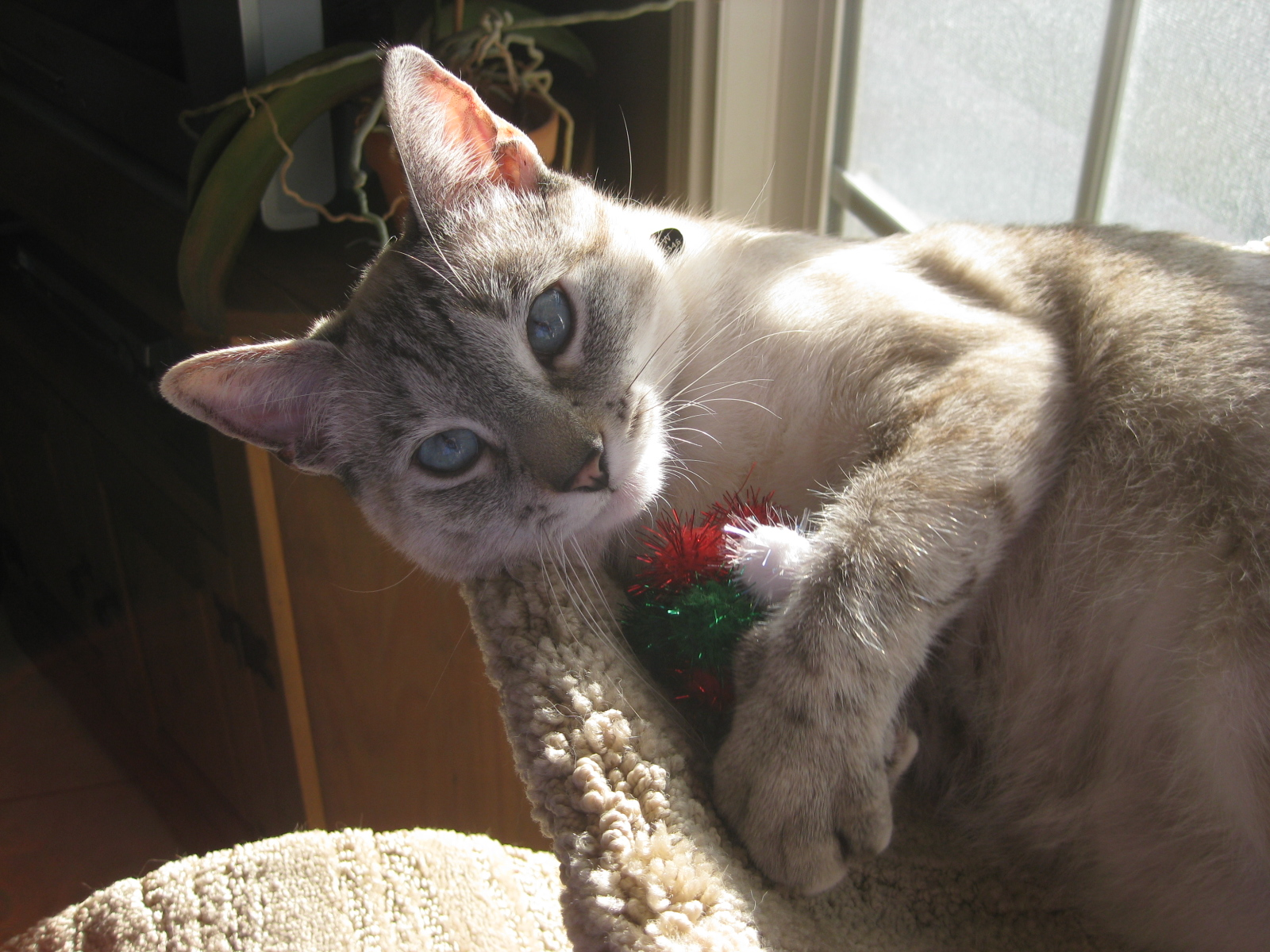 Willow and her favorite toy