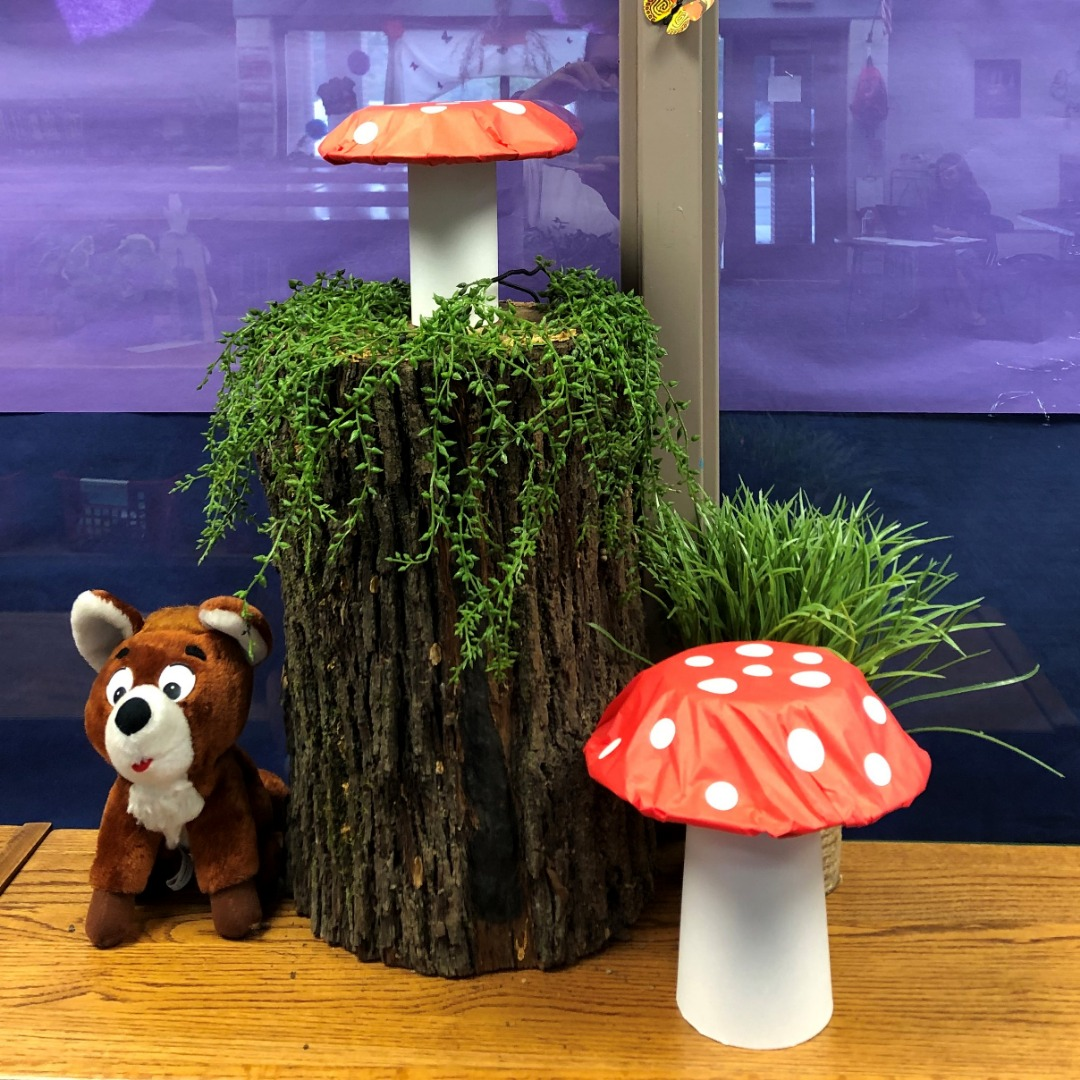 mushrooms and raccoon wait for story