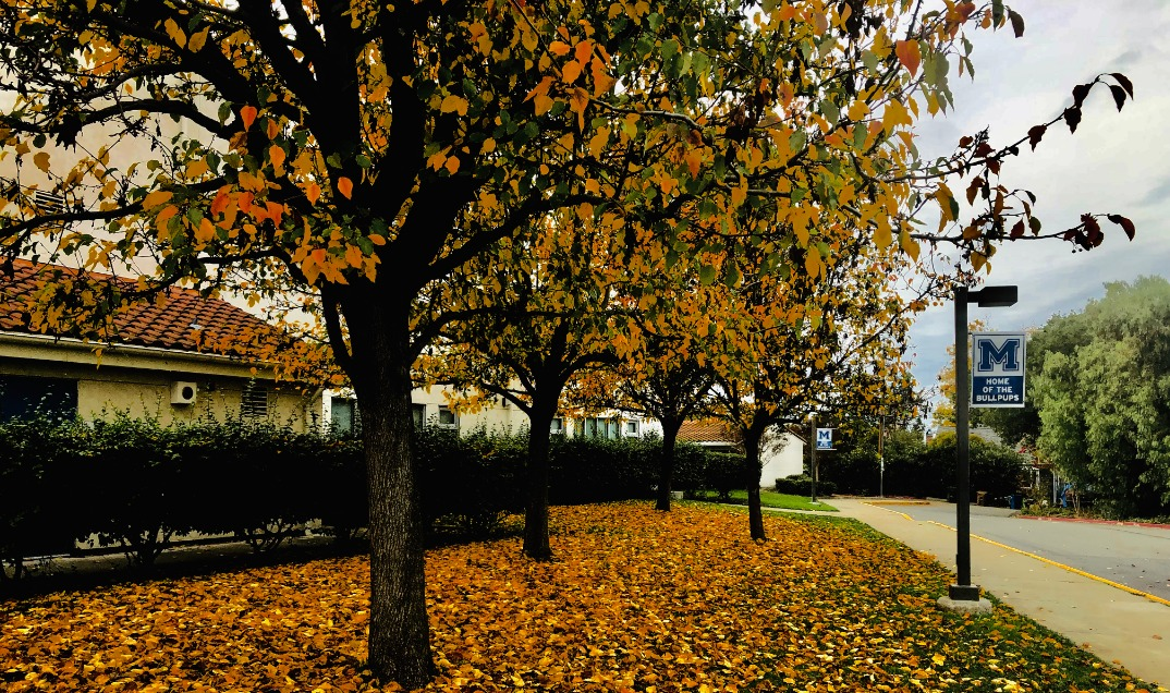 Front of school: Autumn at MJHS