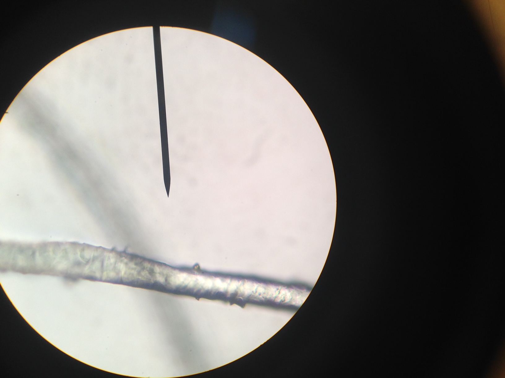 Students use microscopes to analyze hair samples