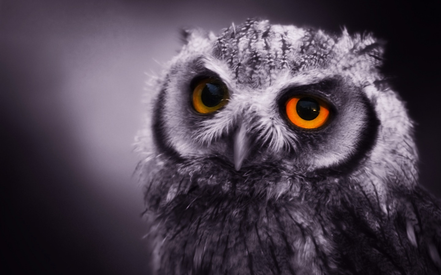 Night_Owl