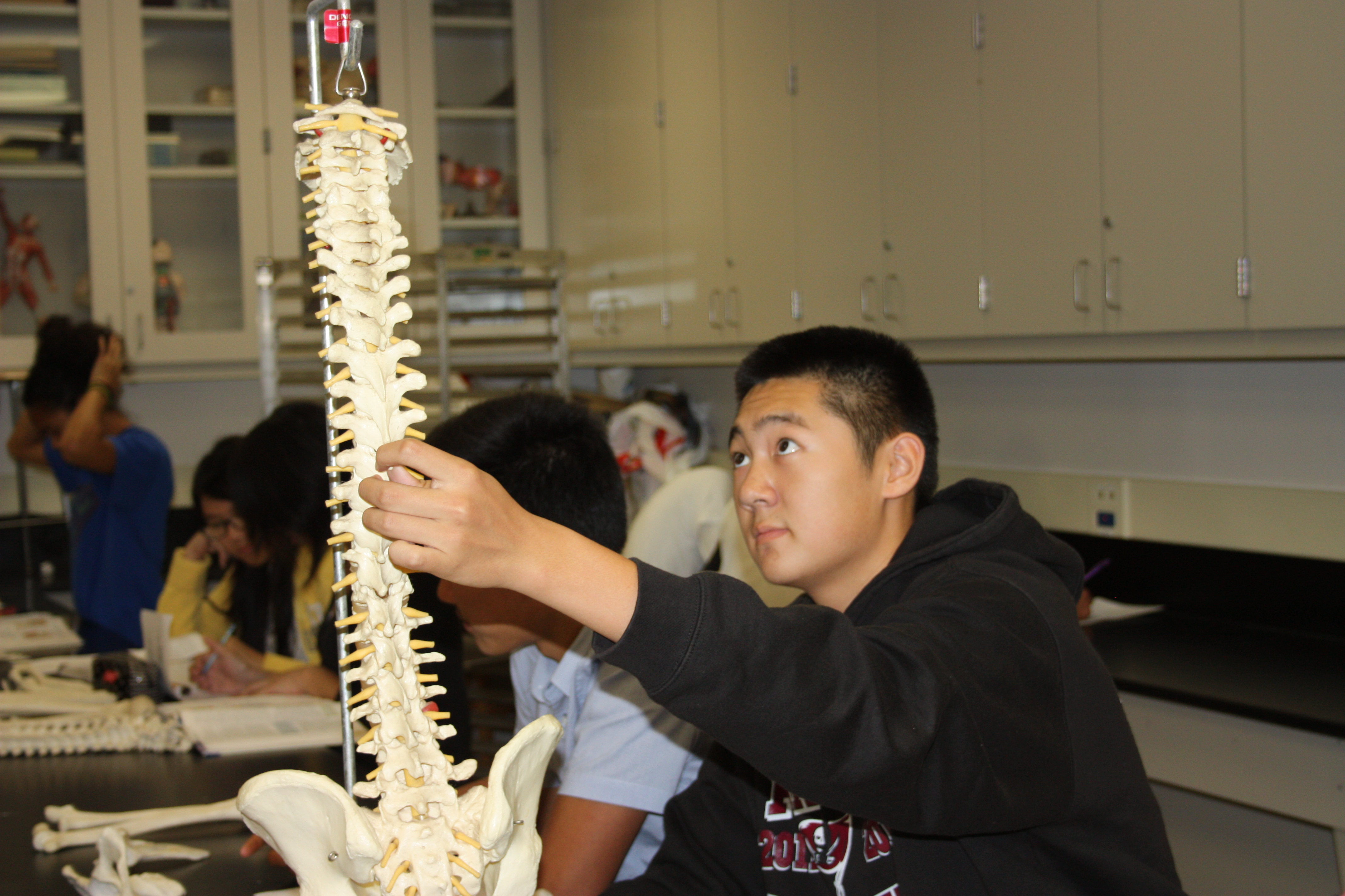Learn about the skeletal system