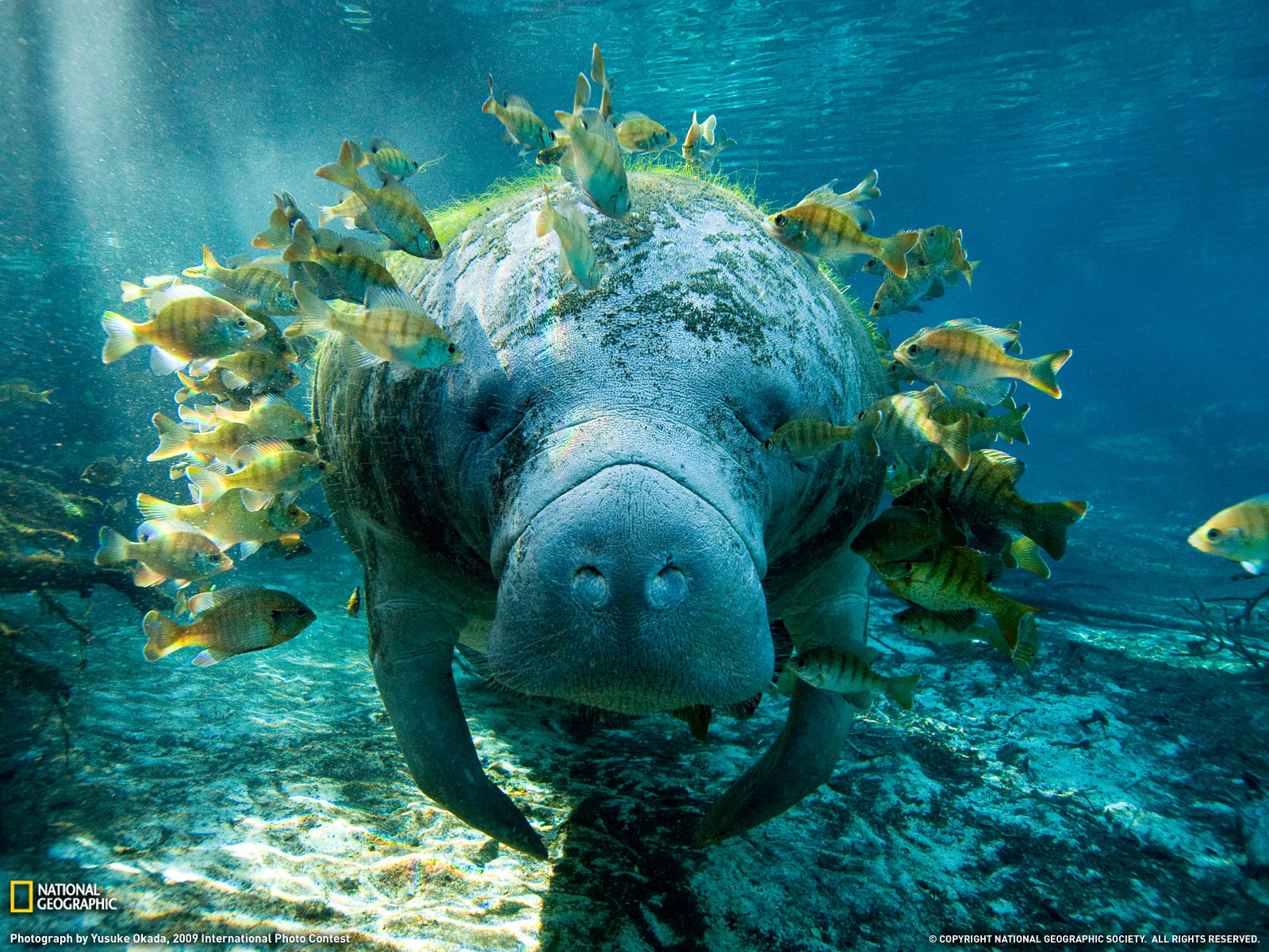 Second Grade: The Manatees