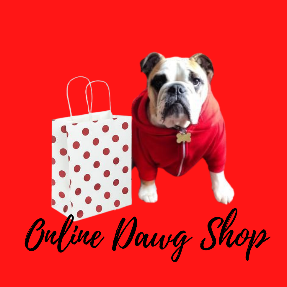 bulldog with gift bag